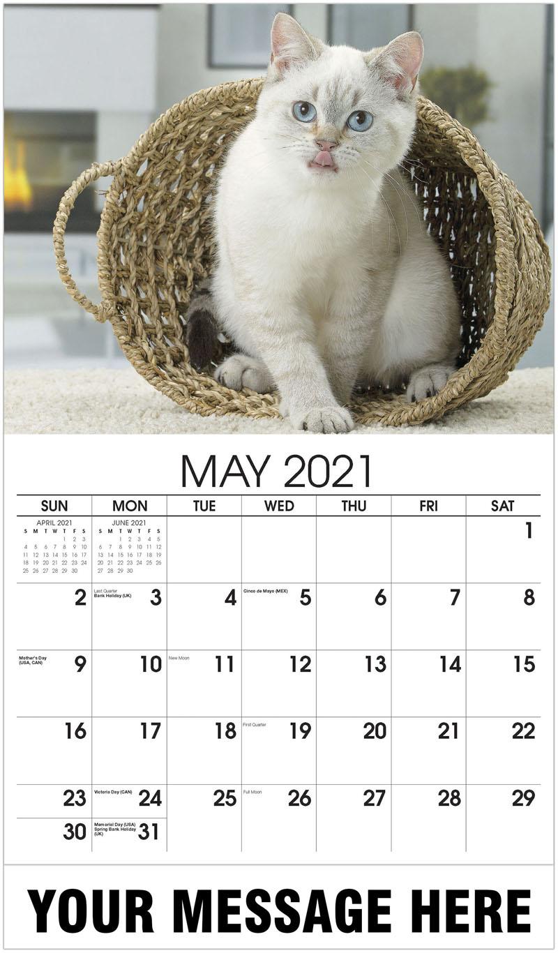 Galleria Pets -2021